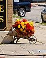 Carnations on the Strand (6209339636).jpg