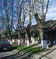 Casas Yerbas Buenas.jpg