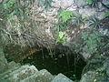Cenote del Parque de Cholul, Yucatán (03).jpg