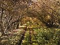Cesta k Poustevně - panoramio.jpg