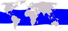 A world map shows pygmy killer whales are found throughout all tropical and subtropical portions of the oceans.