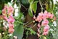 Chemnitz botanischer garten orchideen.JPG