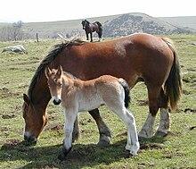 El caballo 220px-Chevaux