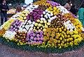 Chrysanthemum.show.jpg