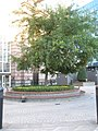 Circular flowerbed in front of Beaufort House - geograph.org.uk - 1015654.jpg
