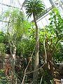 Cleveland Botanical Garden - interior 1.jpg
