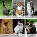 Collage of Six Cats- Interwikis.jpg