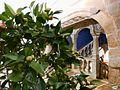 Concurso internacional de la camelia-Edificio Sarmiento de Pontevedra (8539103828).jpg