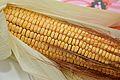 Corn Kernel - Howrah 2015-04-26 8459.JPG