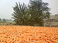 Corn on Mian Asgher's roof (Sohail Aziz 0323-2600009) - panoramio.jpg