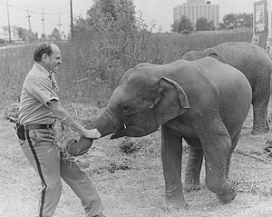 Montgomery County Police Department - An MCPD corporal with an elephant at a carnival in 1971.