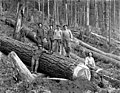 Crew yarding logs, Snohomish County, ca 1913 (PICKETT 106).jpeg