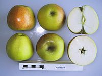 Cross section of Aivaniya, National Fruit Collection (acc. 1957-073).jpg