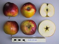 Cross section of Blaze, National Fruit Collection (acc. 1974-047).jpg