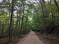 Croton Gorge park trail.jpg