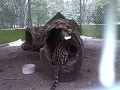 Cunaguaro en parque cachamay.jpg