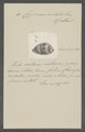 Cypraea undata - - Print - Iconographia Zoologica - Special Collections University of Amsterdam - UBAINV0274 088 02 0057.tif