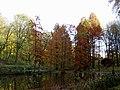 DO-ND 05-Sumpfzypressenbestand Herbst.jpg