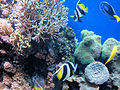DSC26582, Monterey Bay Aquarium, California, USA (6364693457).jpg