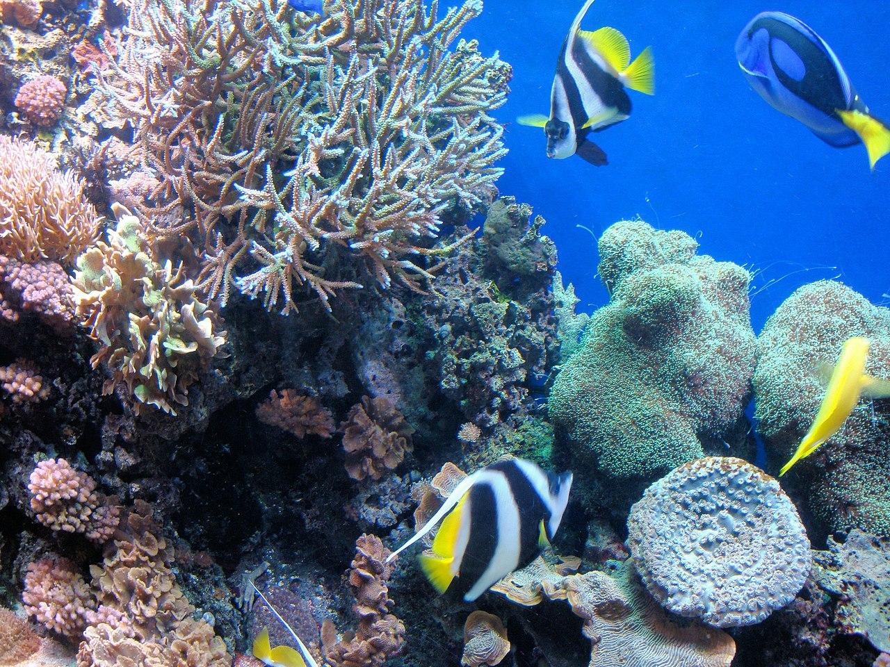 29 Gallon Aquarium Light Size Marineland Marineland