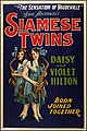 Daisy and Violet Hilton (1920 poster).jpg