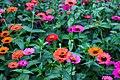 Daisy flowers.jpg