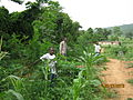Darsfield farm Ghana 2010 - 001.jpg