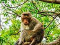 Daulatabad, Aurangabad - panoramio (43).jpg
