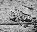 Dead confederate with gun.jpg