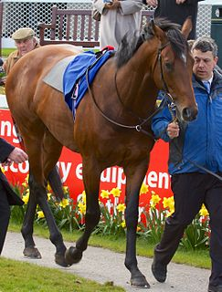 Declaration of War (horse) American-bred Thoroughbred racehorse