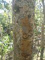 Deforestation-00, Khasia Hill, Srimongol, Moulvibazar, Bangladesh, (C) Biplob Rahman.jpg