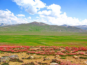 Karakoram-West Tibetan Plateau alpine steppe - Deosai National Park in Pakistan.