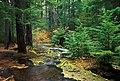 Deschutes National Forest Jack Creek (36922384312).jpg