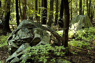 Devín Carpathians - Forest in Devín Carpathians