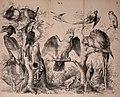Die Praxis der Naturgeschichte - ein vollständiges Lehrbuch über das Sammeln lebender und todter Naturkörper; deren Beobachtung, Erhaltung und Pflege im freien und gefangenen Zustand; Konservation, (20941722925).jpg