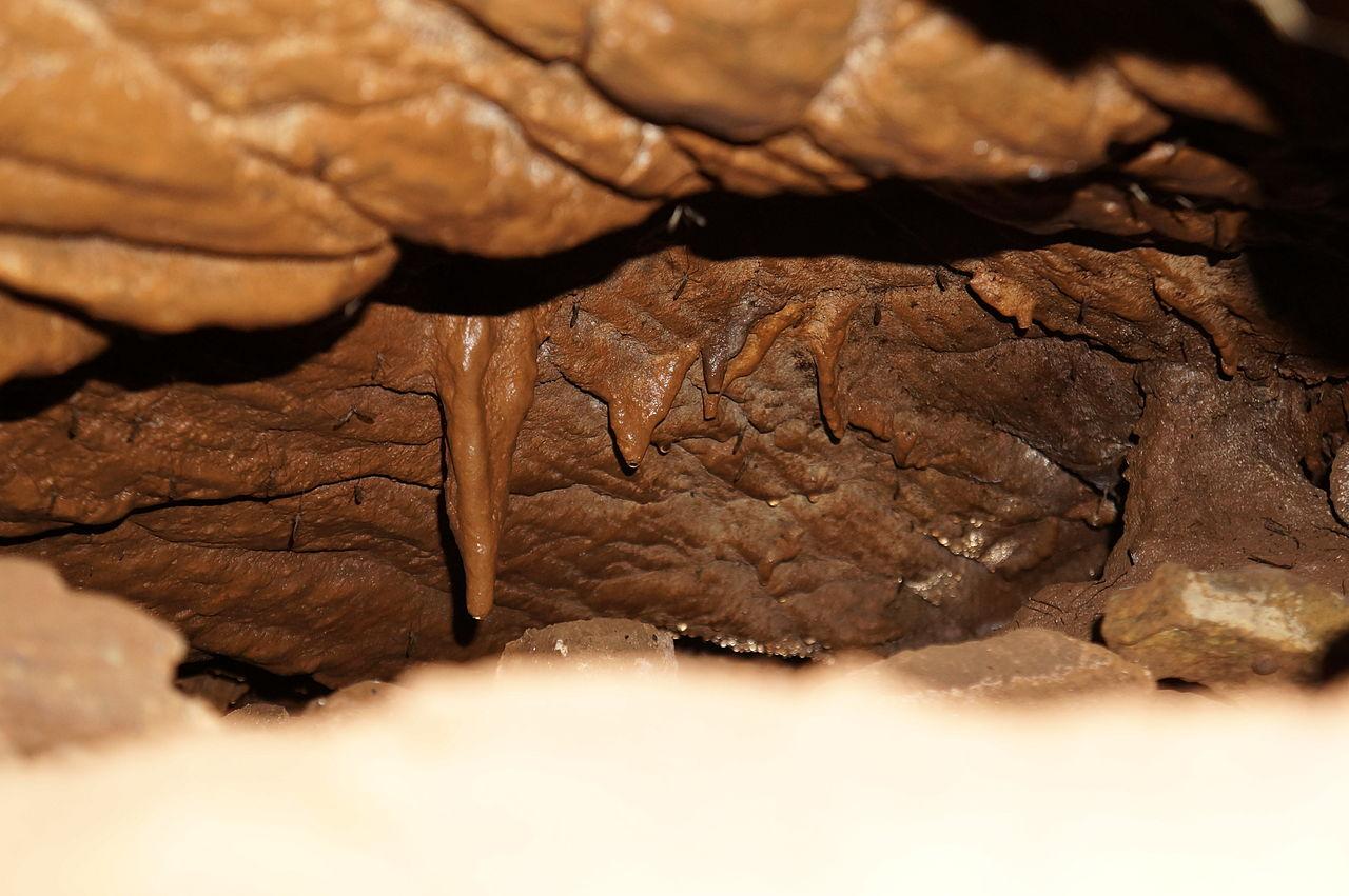 Image Result For Vinhais