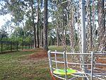Disc Golf Disc in Basket.jpg