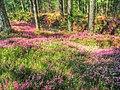Divcibare - panoramio (3).jpg