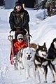 Dog Sled Rides (6836606398).jpg
