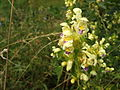 Dolní Břežany, Zálepy, květina.JPG