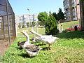 Domestic geese.jpg