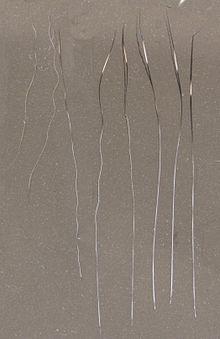 Awn Hair Wikipedia