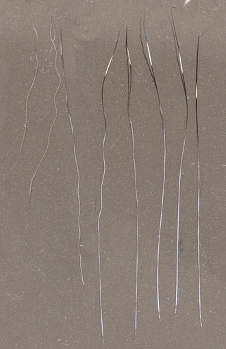 Fur - Down, awn and guard hairs of a domestic tabby cat
