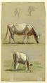 Drawing, Cattle, Two Grazing Cows and the Backs of Calves, 1875–80 (CH 18369137).jpg