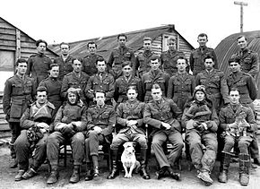 Portrait of twenty-four men in military uniforms and flying suits, with a dog sitting in foreground and a cat on one man's lap