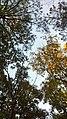 Eagle Overlook Jordan Lake NC 87 (5166095440).jpg