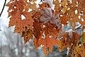 Early season snow in Cades Cove--Erin Sullivan, 11 12 19 (49070633156).jpg