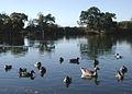 Eastrington Ponds Nature Reserve.jpg