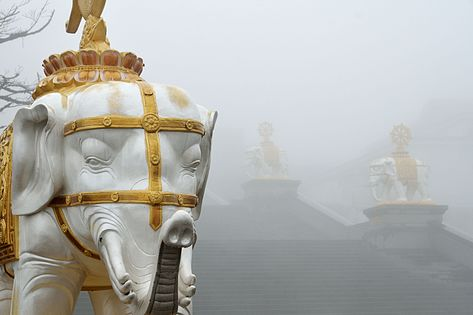 Elephant statues in the fog on the steps of the temple atop Mount Emei