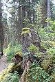 Emerald Lake IMG 5121.JPG